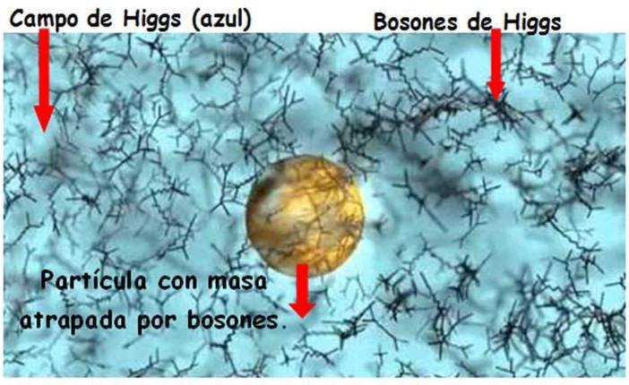 campo higgs bosones
