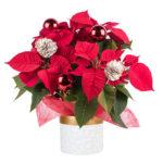 Regalar flores y plantas por Navidad