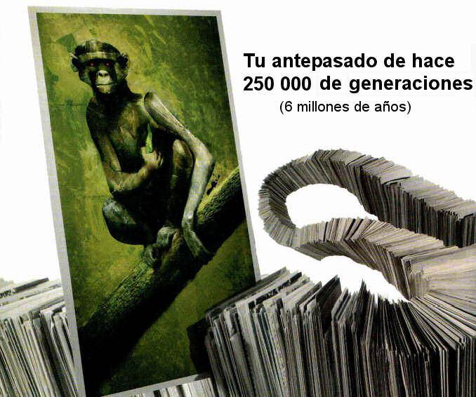 antepasados simios