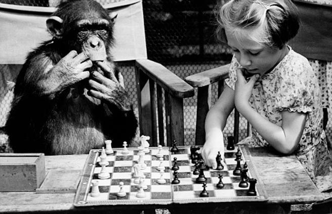 chimpance humano