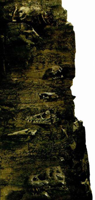estratos tierra paleontologia