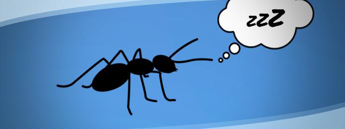 hormiga durmiendo