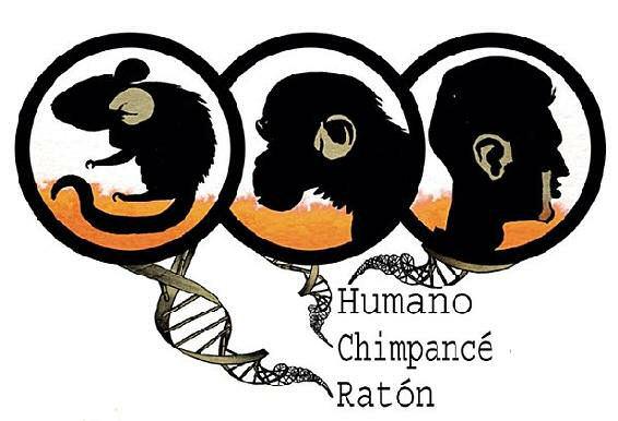 humanos chimpances ratones genes