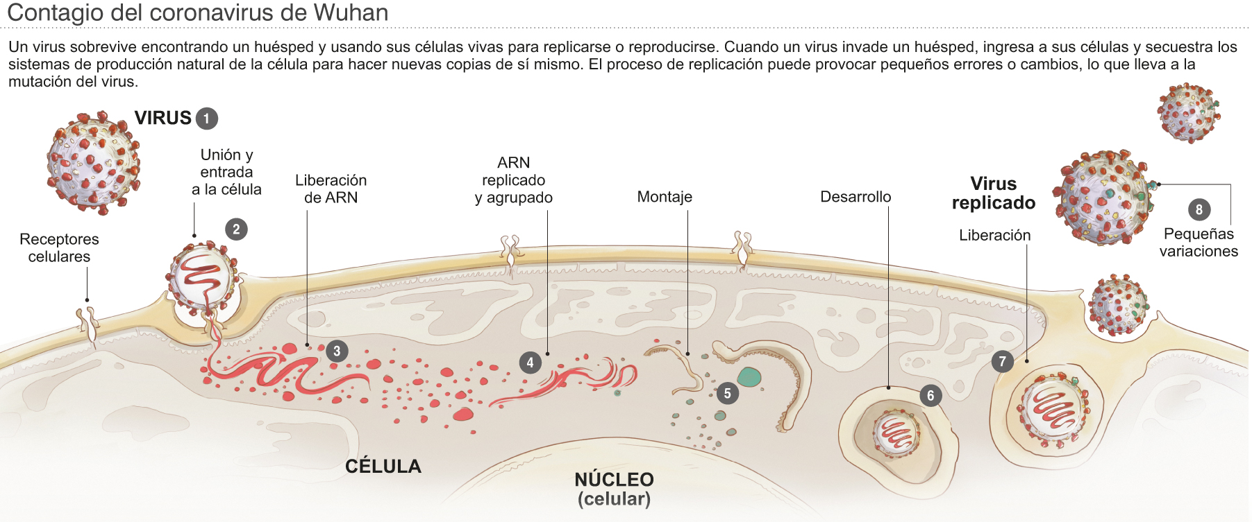 coronavirus contagio propagacion