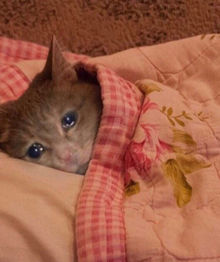 gatito depresivo triste