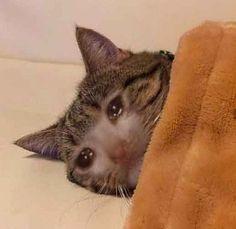 gatito llorando cama