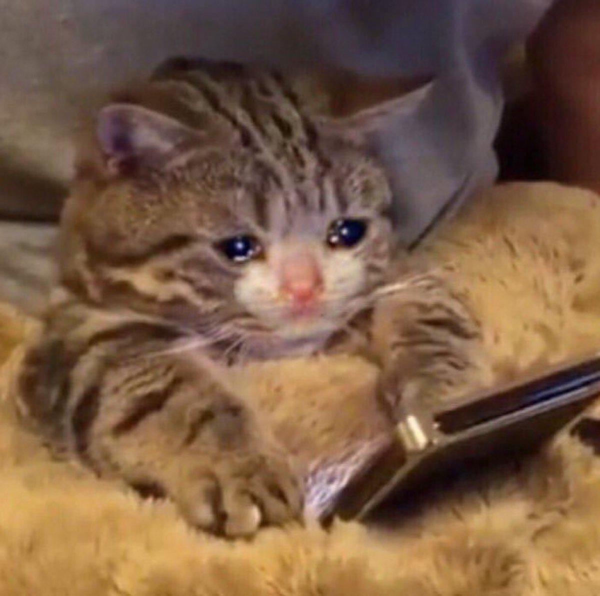 gatito llorando