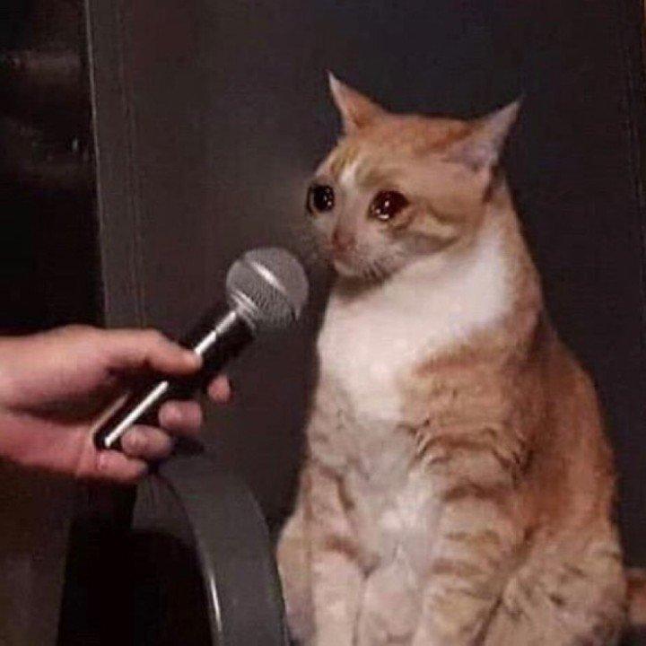 gatito triste microfono