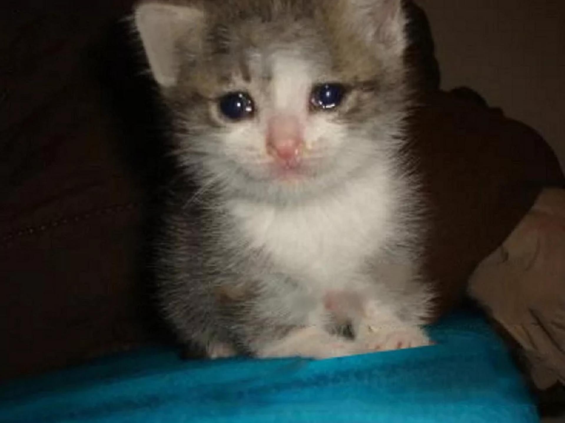 gatitos llorando