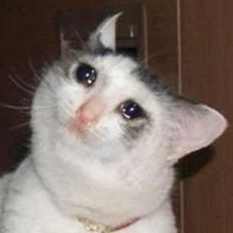 gato depresivo depre