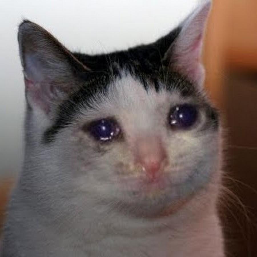gato depresivo triste