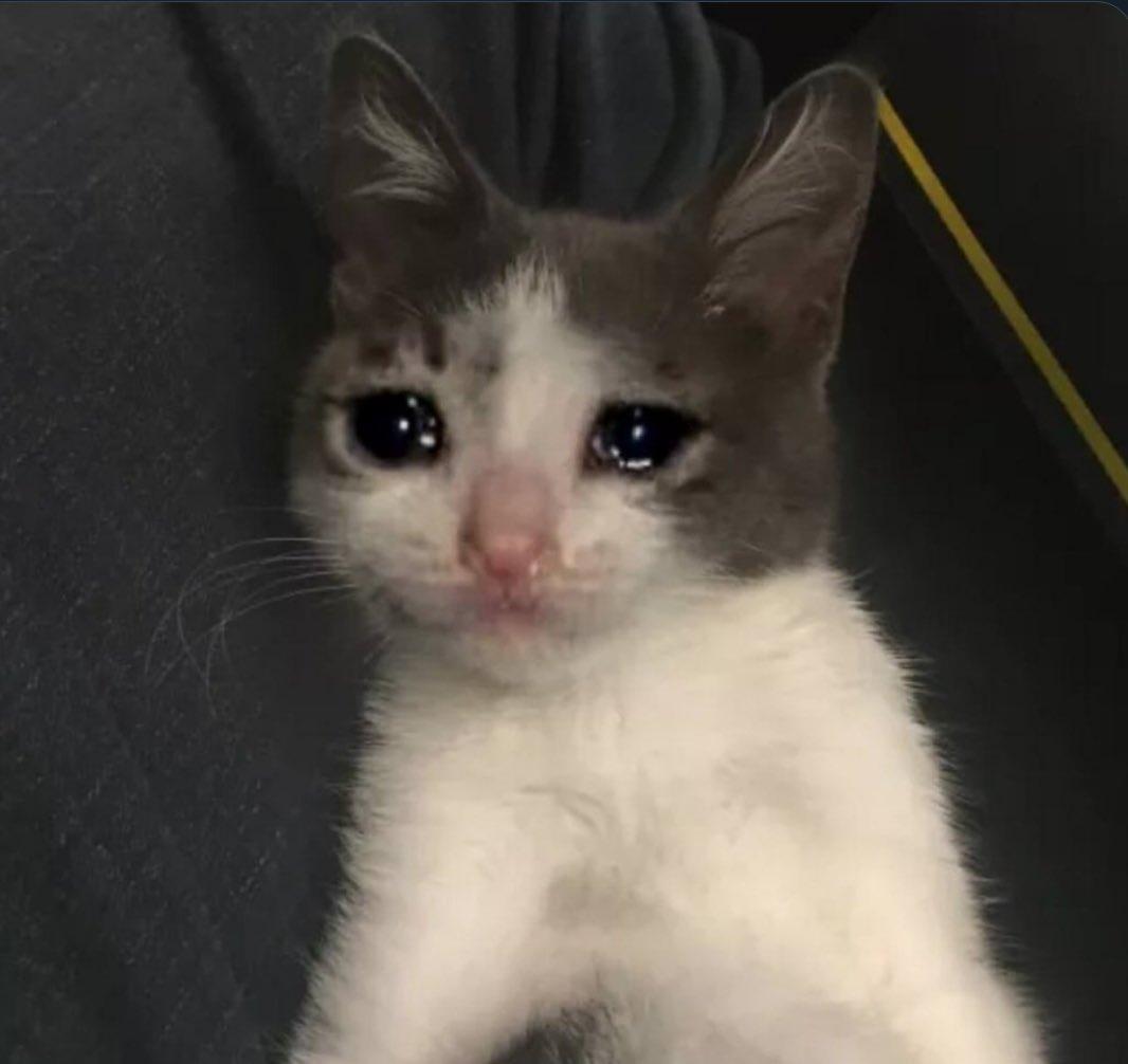 gato depresivo