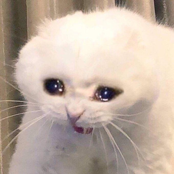gato enfadado llorando