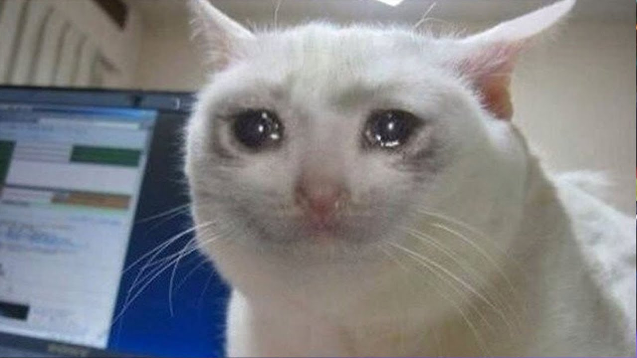 gatos llorando