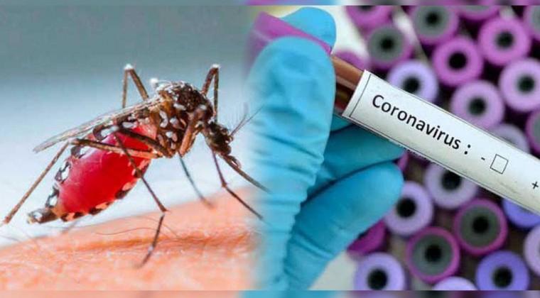 mosquitos coronavirus