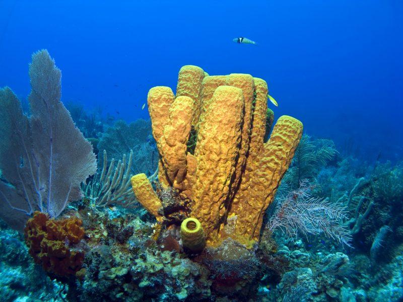esponjas mar marinas