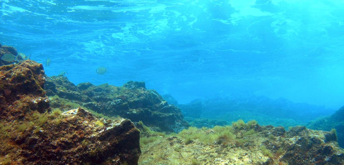 mar oceanos virus