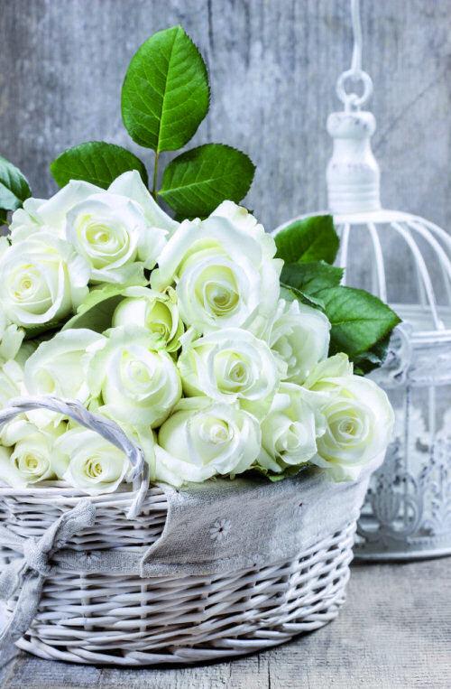 cesto rosas blancas
