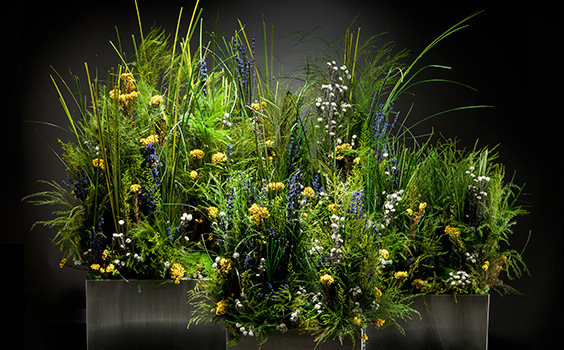 pradera decoracion plantas