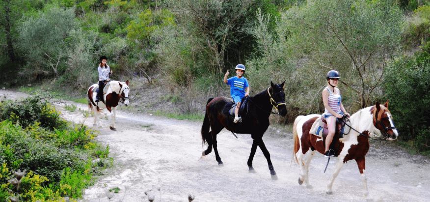 caballo horses reiten mallorca