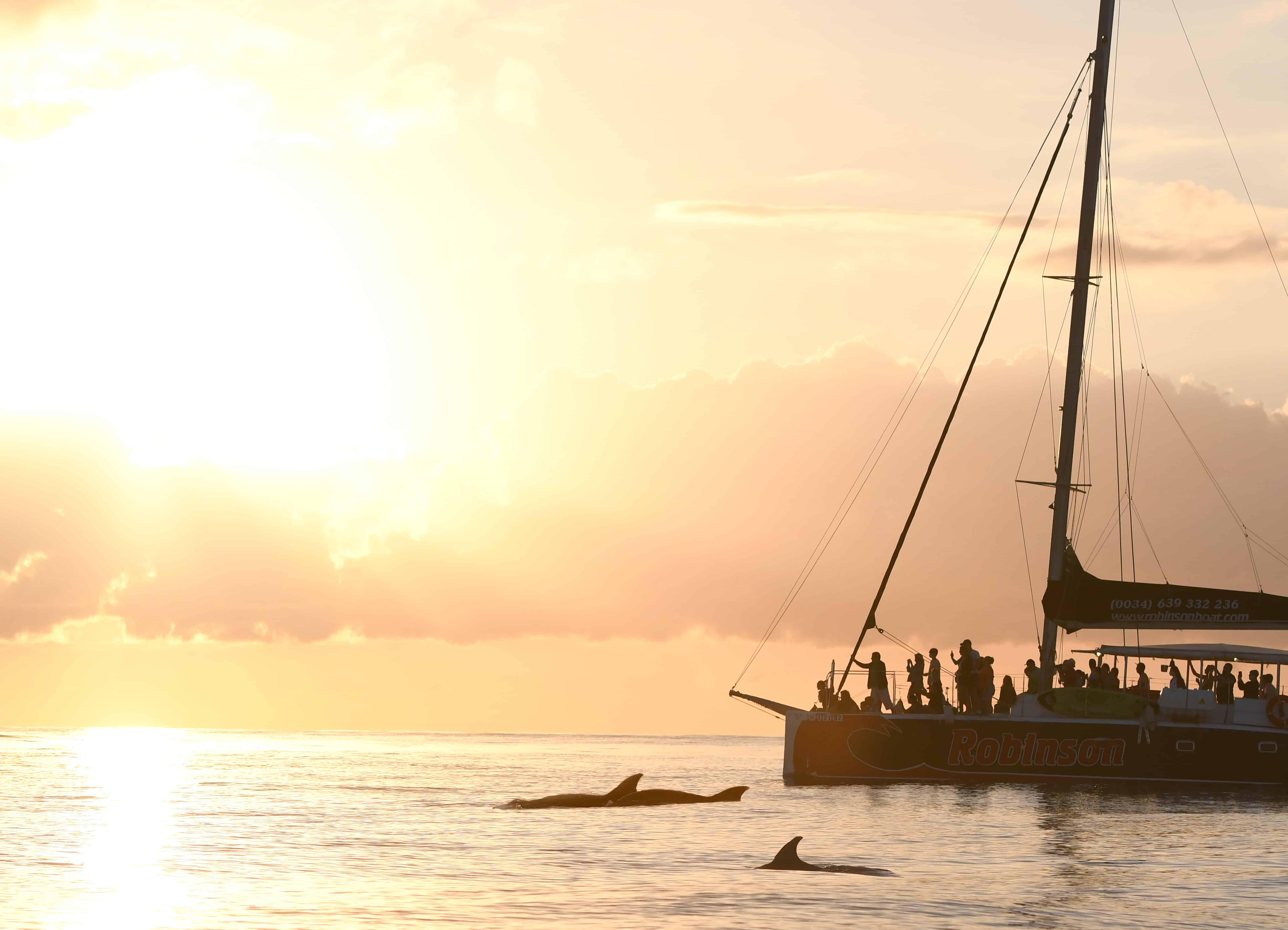 excursion barco mallorca delfines